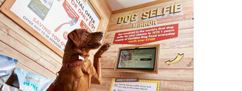 World's First Dog Selfie Mirror header