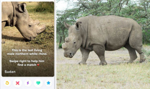 Sudan-the-northern-white-rhino-796819